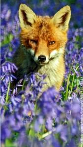 WAD-fox-2_edited