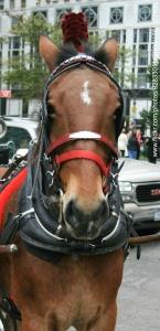 WAD-horse-2_edited